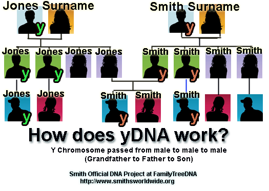 http://www.smithsworldwide.org/img/ydna.png